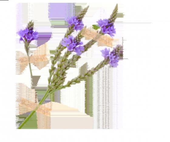 Železník